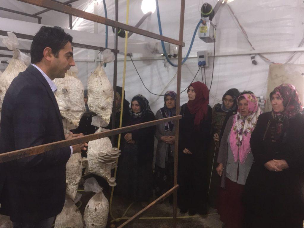 Mantar Kursiyerlerine Teknik Gezi Düzenlendi » halk eğitim, mantar, milli eğitim, sungurlu, tarım