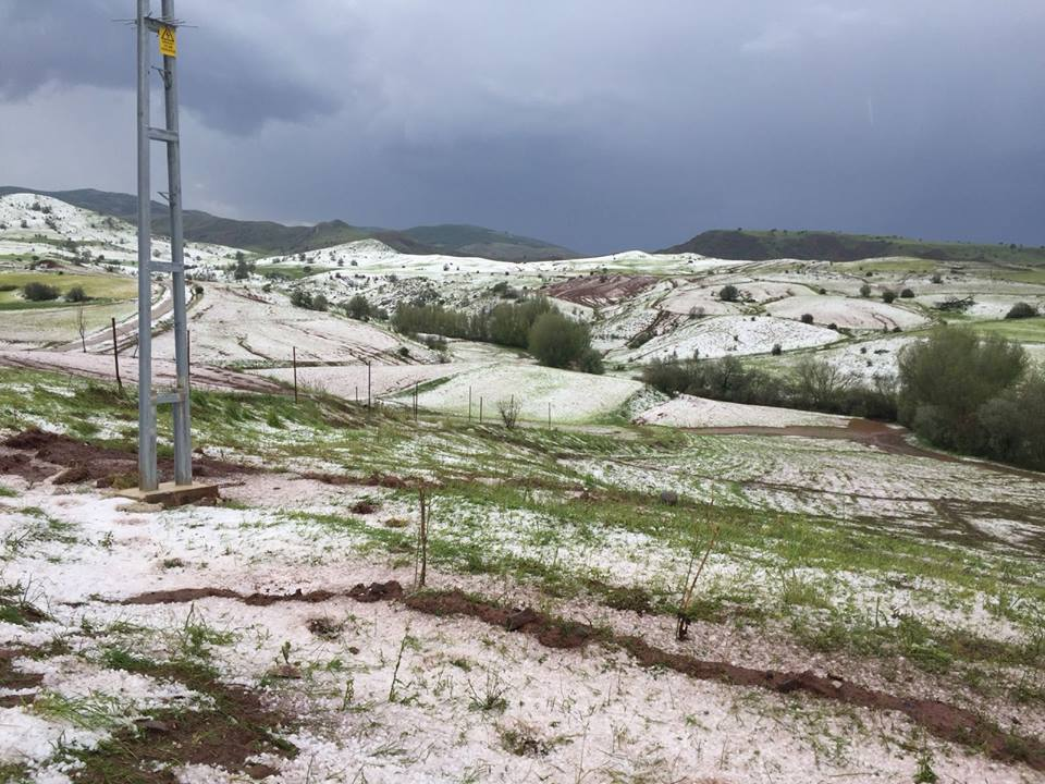 Sungurlu'da etkili olan dolu yağışı ekili tarım arazilerine zarar verdi. | Sungurlu Haber