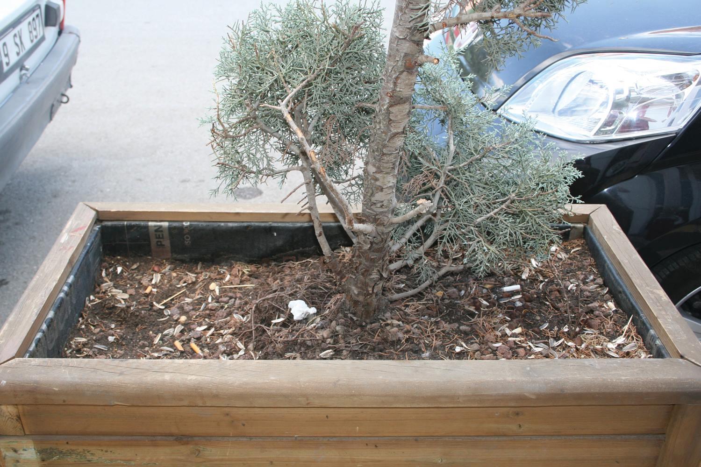 Vatandaşların duyarsızlığı süs ağaçlarını çöp kutusuna döndürdü. Sungurlu Belediyesi tarafından caddelere yerleştirilen süs ağaçlarına bazı vatandaşlar tarafından çöp atılması yapılan hizmeti gölgelemeye başladı.   Sungurlu Haber