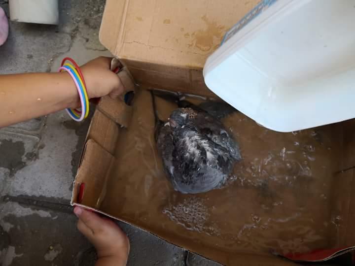 Sungurlu'da çocuklar buldukları yaralı güvercin için seferber oldu. Çocukların güvercini Uyutmamak için yaptığı ilk müdahale ise görenleri güldürdü. | Sungurlu Haber
