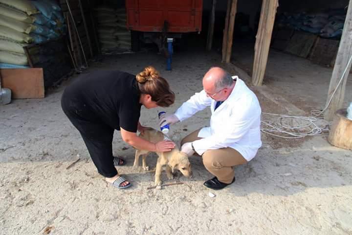 Gökçam Köyü'nde ikamet eden Canan Sabancılar, Sungurlu Belediye Başkanı Abdulkadir Şahiner'i arayarak bakımını üstlendiği köpekleri için yiyecek, veteriner ve ilaç talebinde bulundu. | Sungurlu Haber