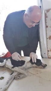 Sungurlu'da zehirlenen köpek duyarlı vatandaşlar sayesinde ölmekten son anda kurtarıldı. | Sungurlu Haber