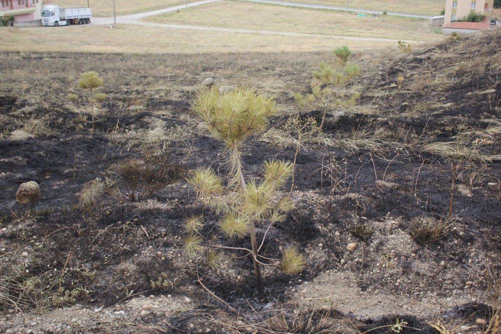 Dün akşam saatlerinde sevgilisinin doğum günü nedeniyle mesire yakınlarında havai fişek atan ve yangına sebebiyet veren 2 kişi gözaltına alındı. Yangında bir çok çam ağacı kül olurken, yangının boyutu gün ağarınca ortaya çıktı. | Sungurlu Haber