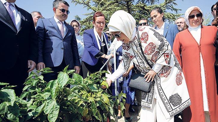 Ata mirası tohumlar arasında Sungurlu'nun 10 dilim kavunu da yer aldı. | Sungurlu Haber